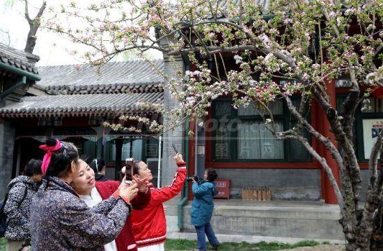 第九届宋庆龄故居海棠文化节开幕