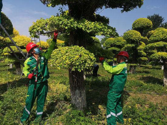 """园林绿化行业工装发布 设计主题为""""绿波荡漾"""""""
